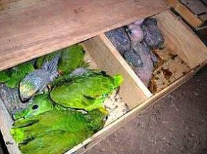 aves aprendidas