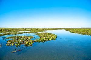 pantanal mineiro