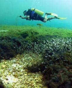 MT nobres mergulho