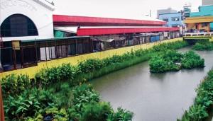 rio despoluido