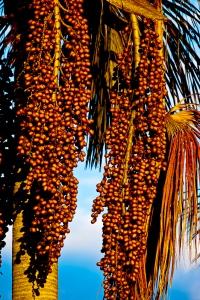 produção do extrativismo vegetal no Mosaico vem aumentando a cada ano e na última safra (2014/2015) foram produzidos e comercializados aproximadamente 17 toneladas de frutos nativos do Cerrado