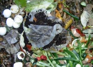 residuo organico domestico